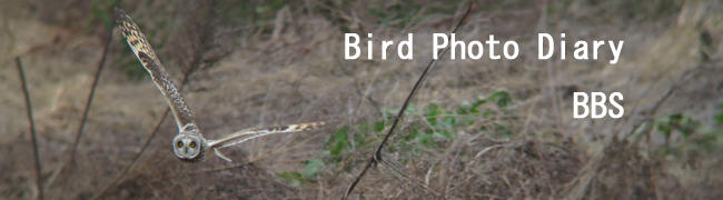 Bird Photo Diary BBS